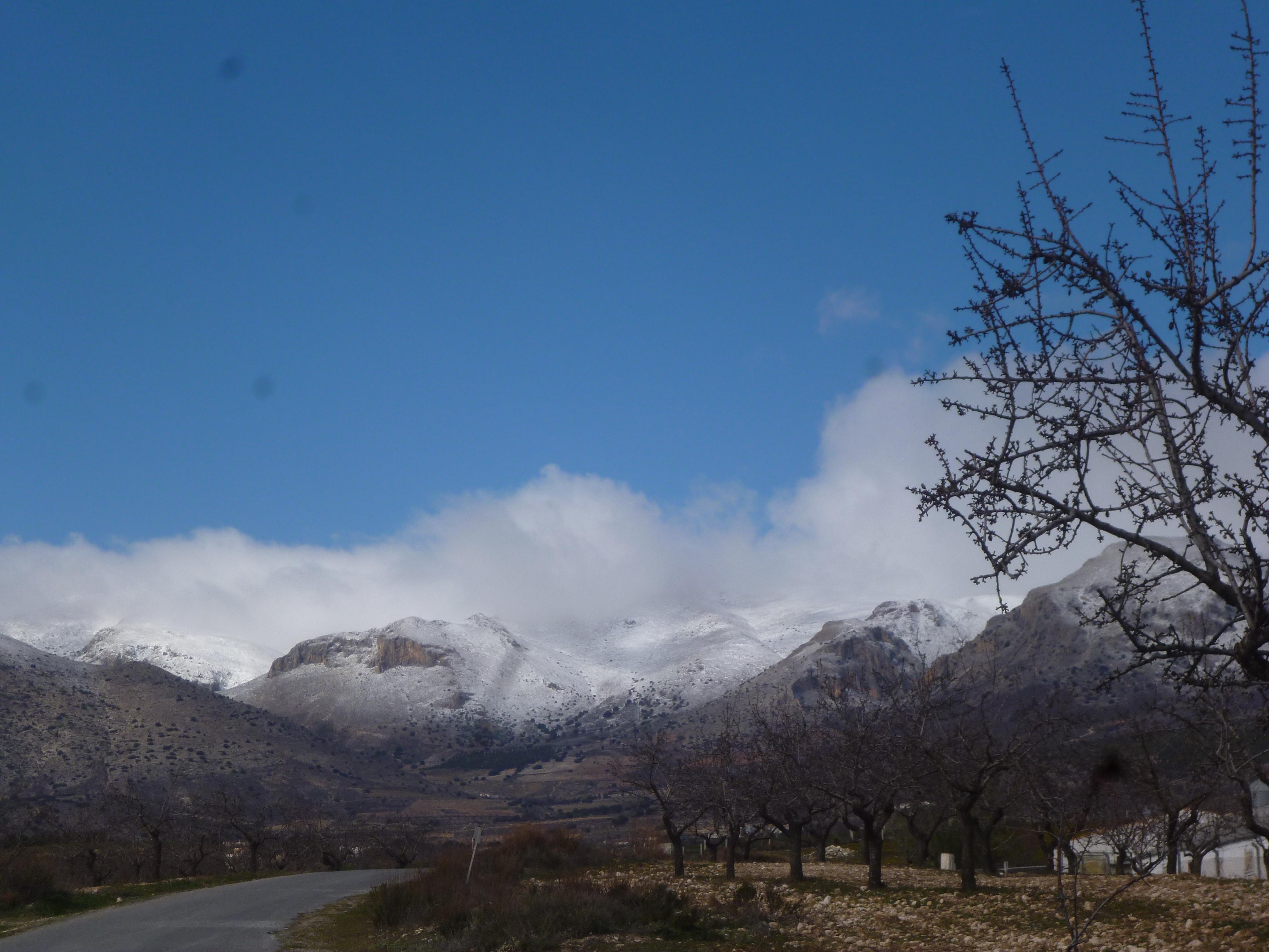 amandiers et neige