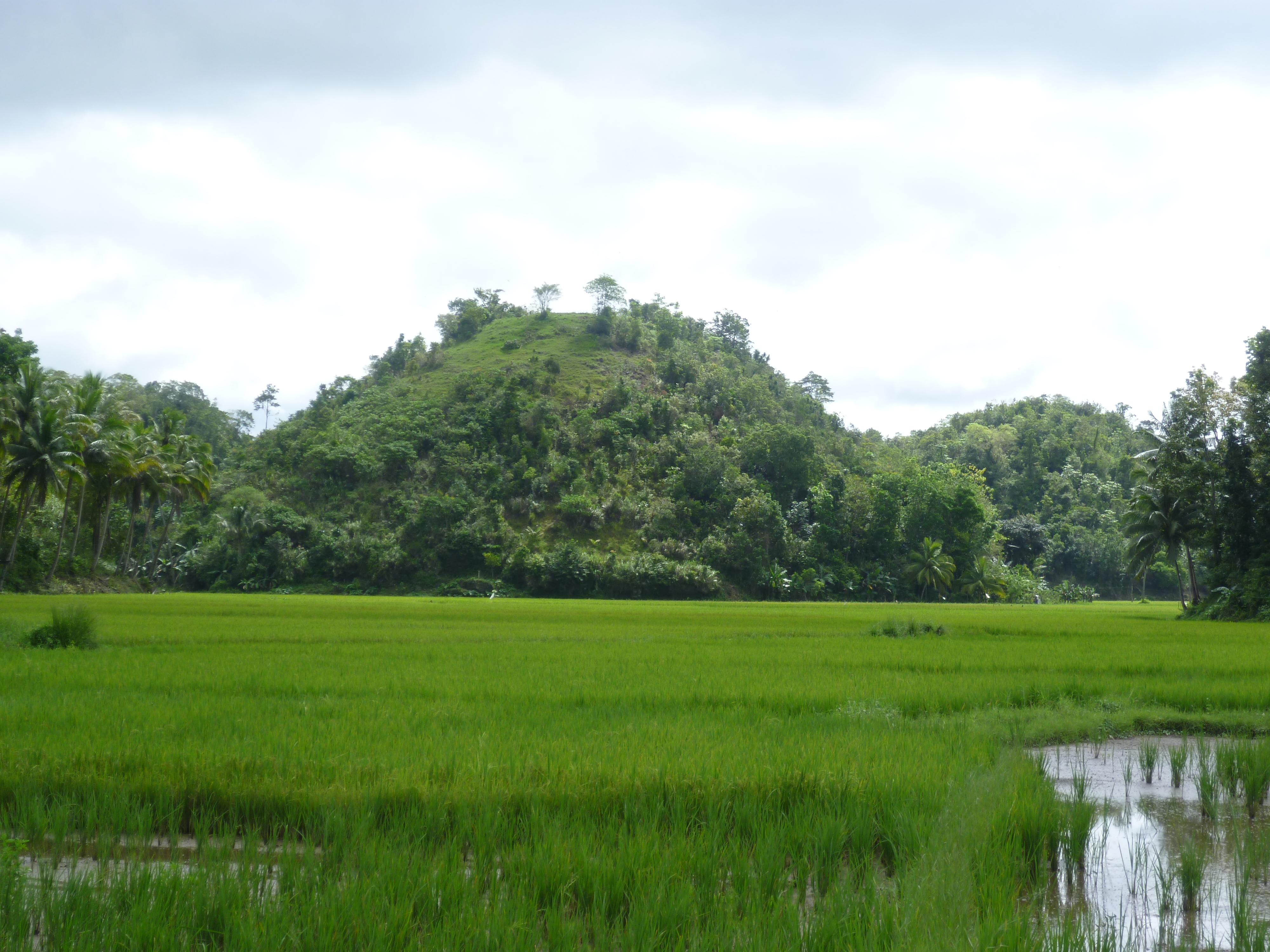 rizière en bord de route