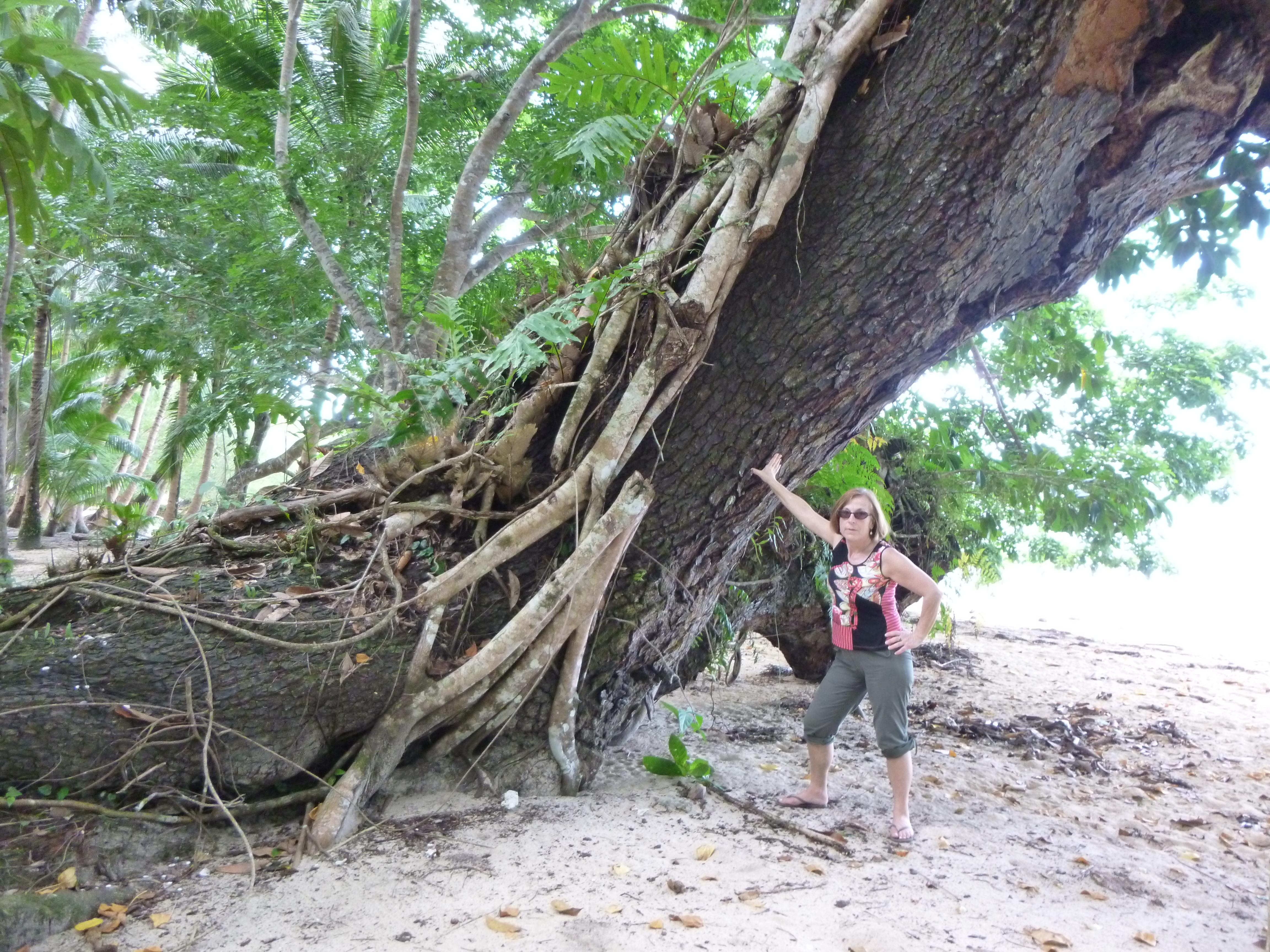 rencontre avec un arbre vénérable au cours d'une sortie