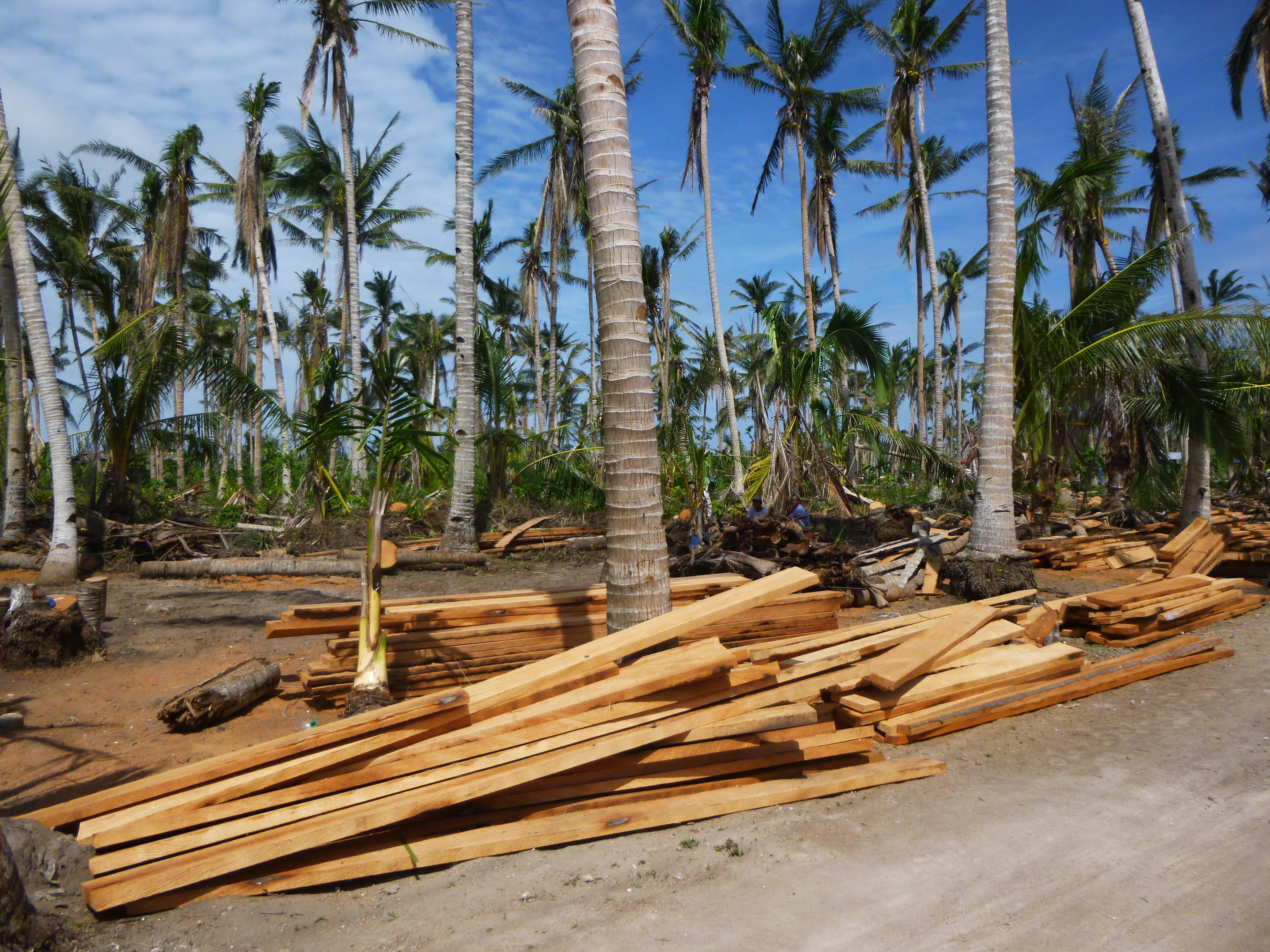 bois de charpente taillé à la tronçonneuse et à main levée dans du cocotier