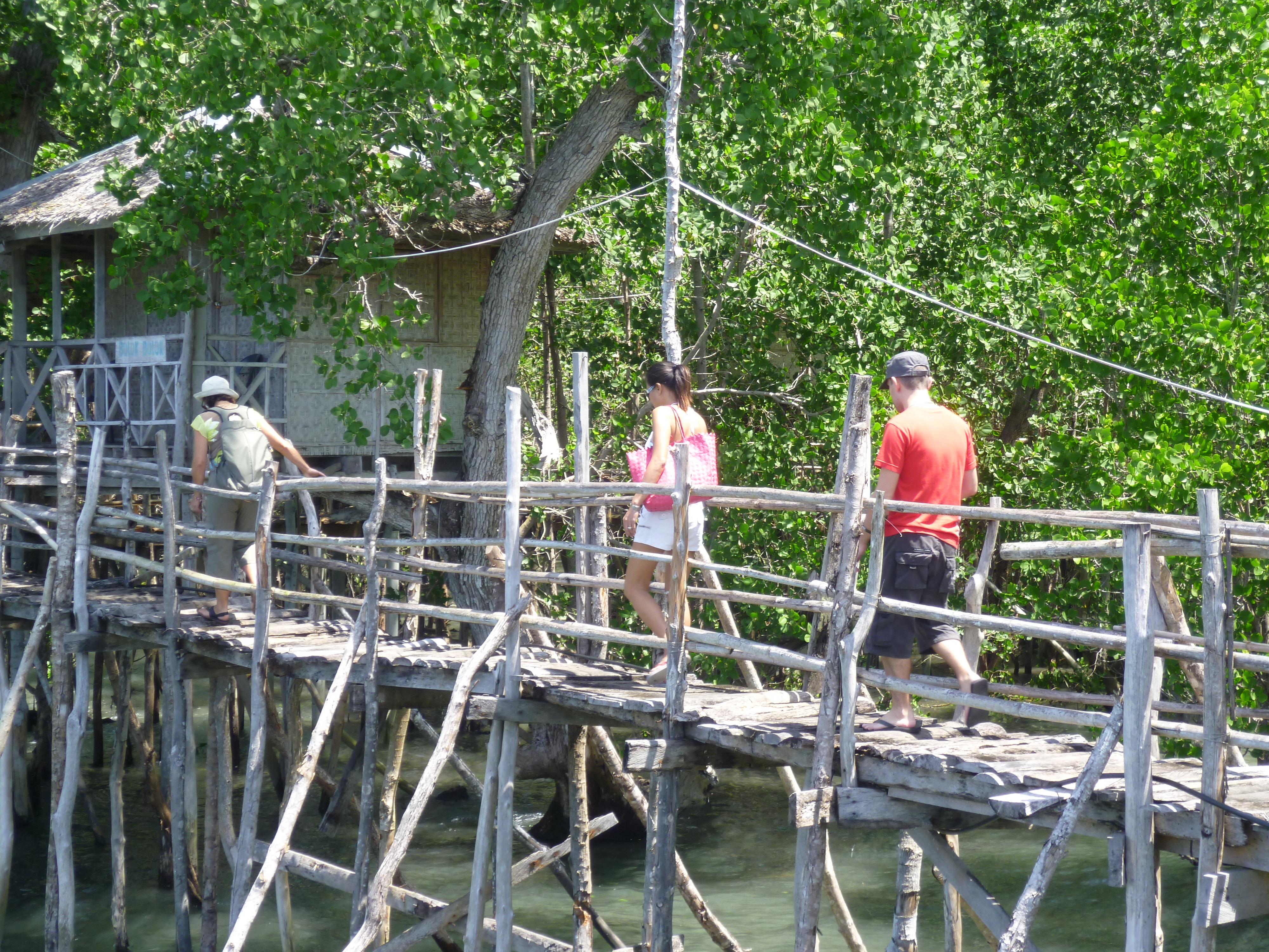 promenade dans une mangrove
