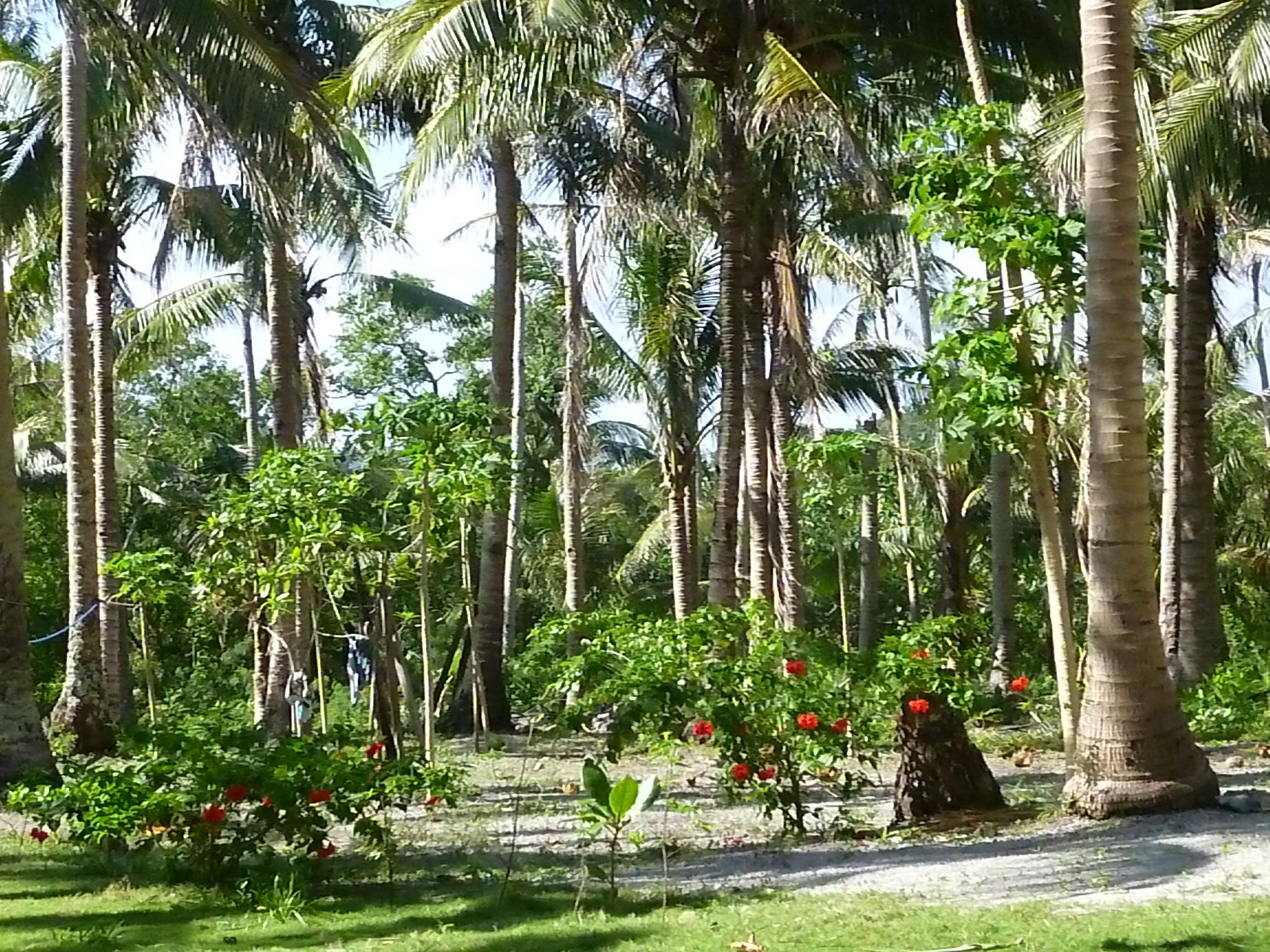 jardins fleuris à little Subic